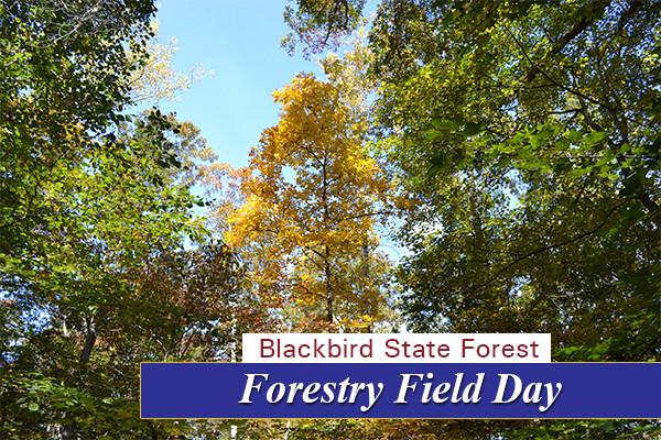 Field Day 7
