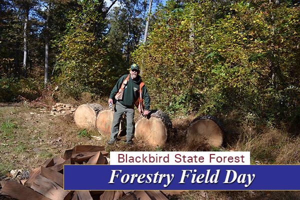 Field Day 8